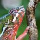 Reptiles, Reading and Re-scheduled birthdays…